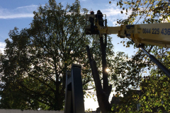 Tree Surgeon In Sussex